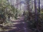 The way to Aritzkuren