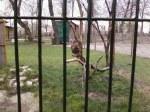 Caged birds=bad