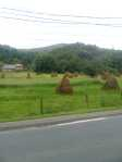 Haystacks like silhouettes of giant lumpy people