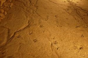 Dinosaur footprints in sppoky lighting effect. Photo by Emée - http://ohmyroad.eu