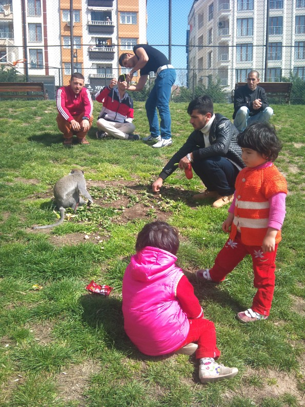 Some kids and a monkey in a park in Zeytinburnu